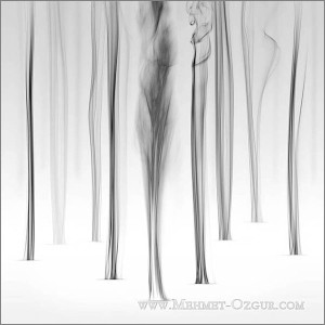 M_Ozgur_Snow-Falling-On-Aspens